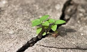 امید ,  امید به زندگی ,  امید به بیمار , طبیب
